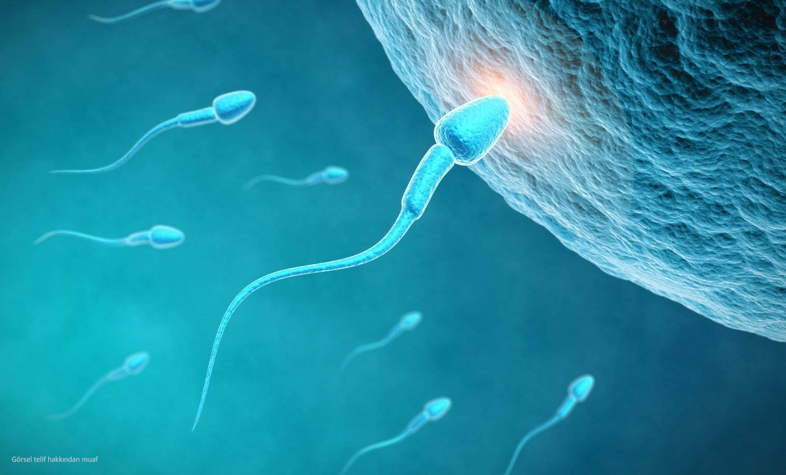 vliyaet-li-stress-na-kachestvo-spermi