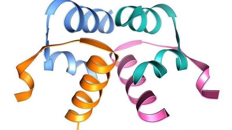 Релаксин-подобные пептиды в мужской репродукции – реалии и перспективы